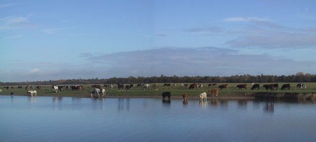 http://upload.wikimedia.org/wikipedia/commons/3/37/Cattle_on_the_Port_Meadow_drinking_in_the_River_Thames_-_geograph.org.uk_-_1555144.jpg