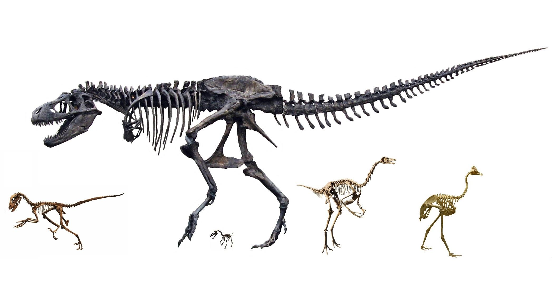 Coelurosauria - Wikipedia