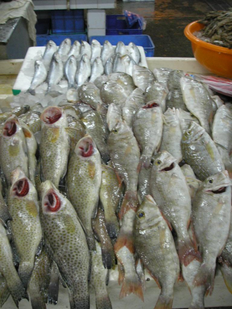 File dubai fish market 1 jpg wikimedia commons for Fishing in dubai