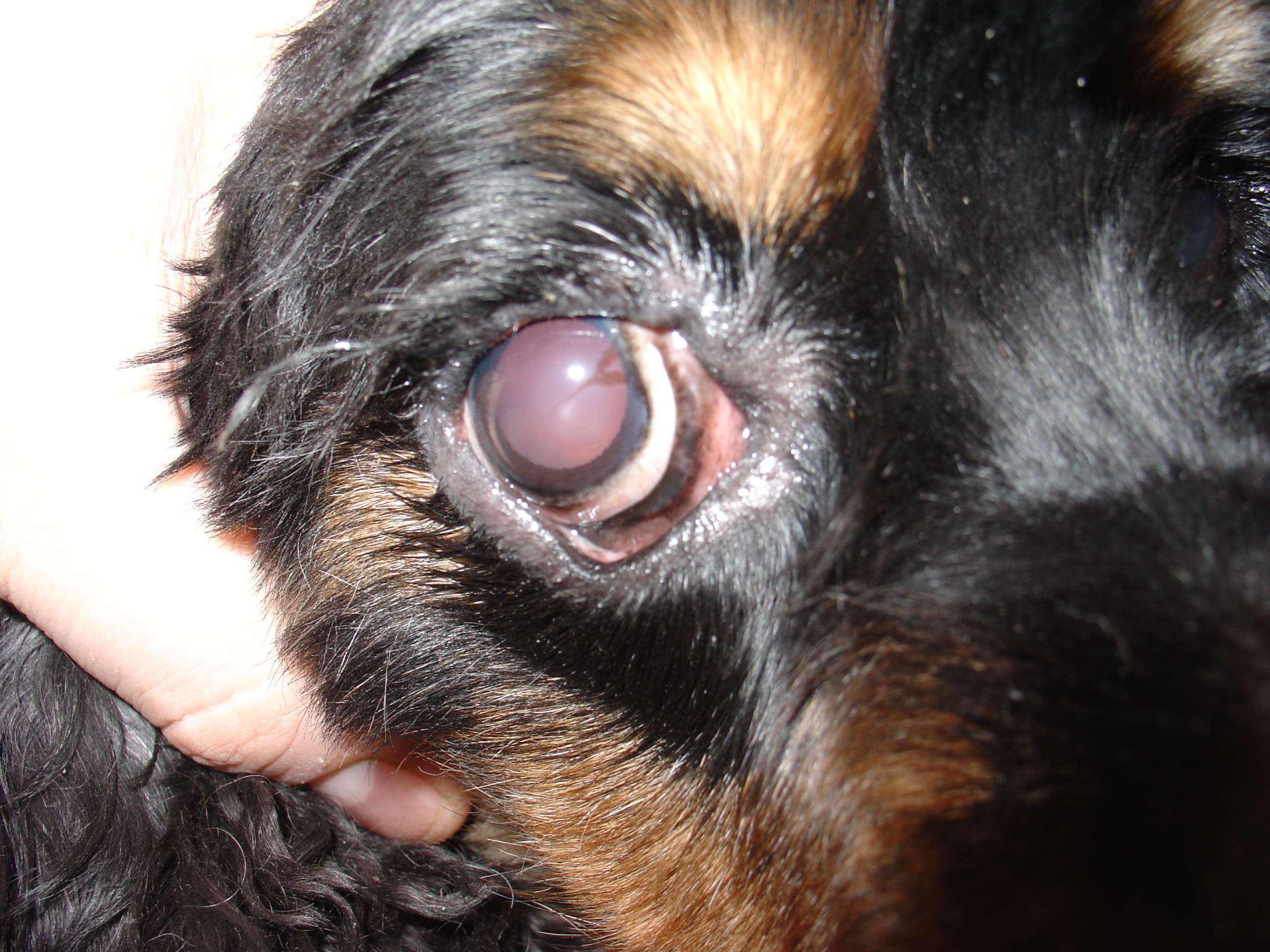 Image Result For Can Dog Allergies
