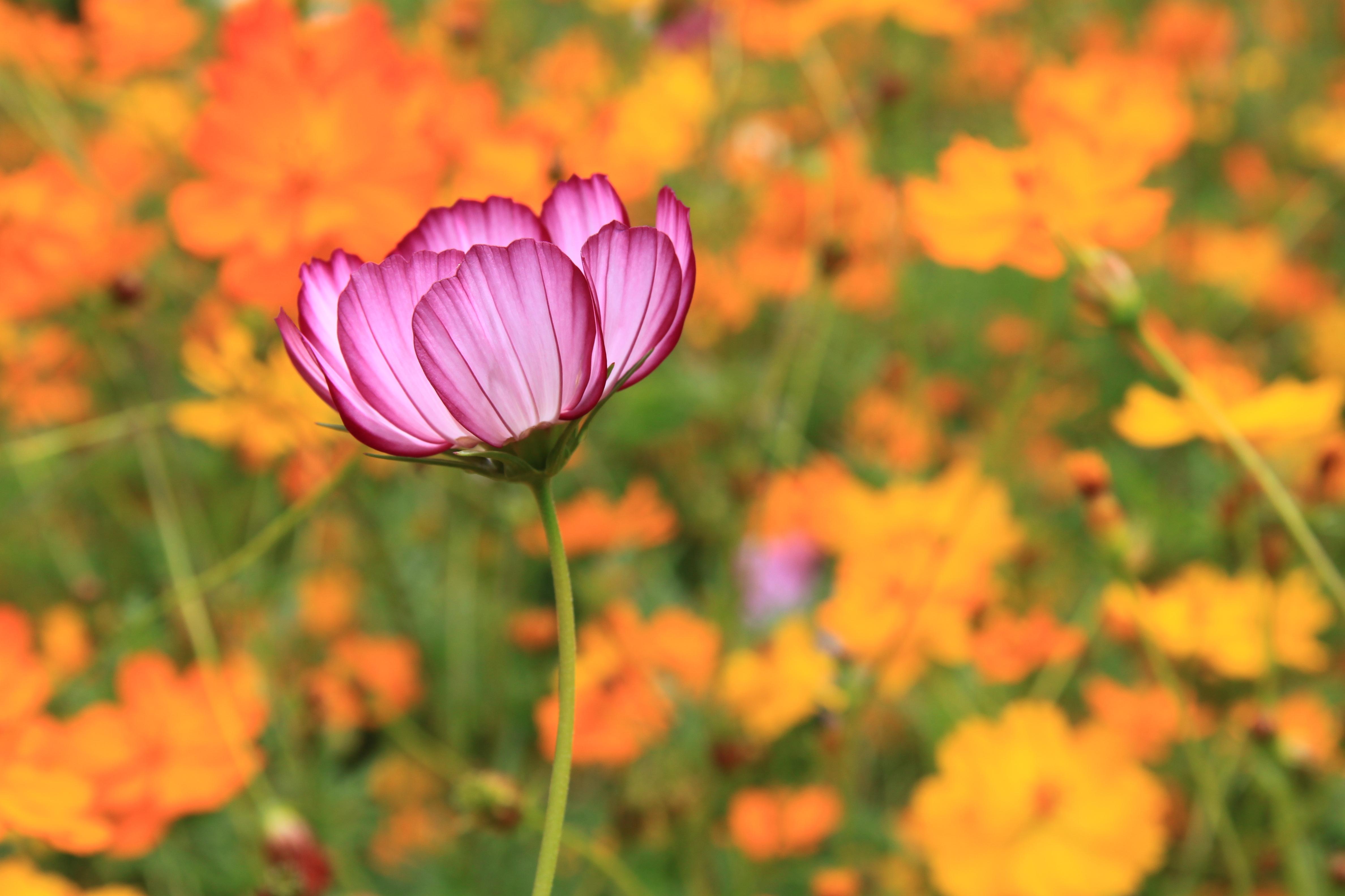 File Fleur Violette Sur Fond Orange Jpg Wikimedia Commons