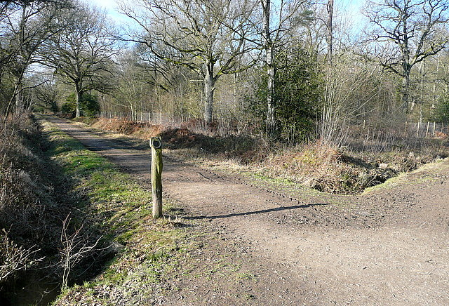 Footpath in Pamber Forest - geograph.org.uk - 2256094