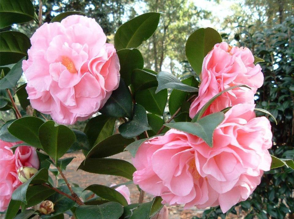 Coastal Georgia Botanical Gardens Wikipedia