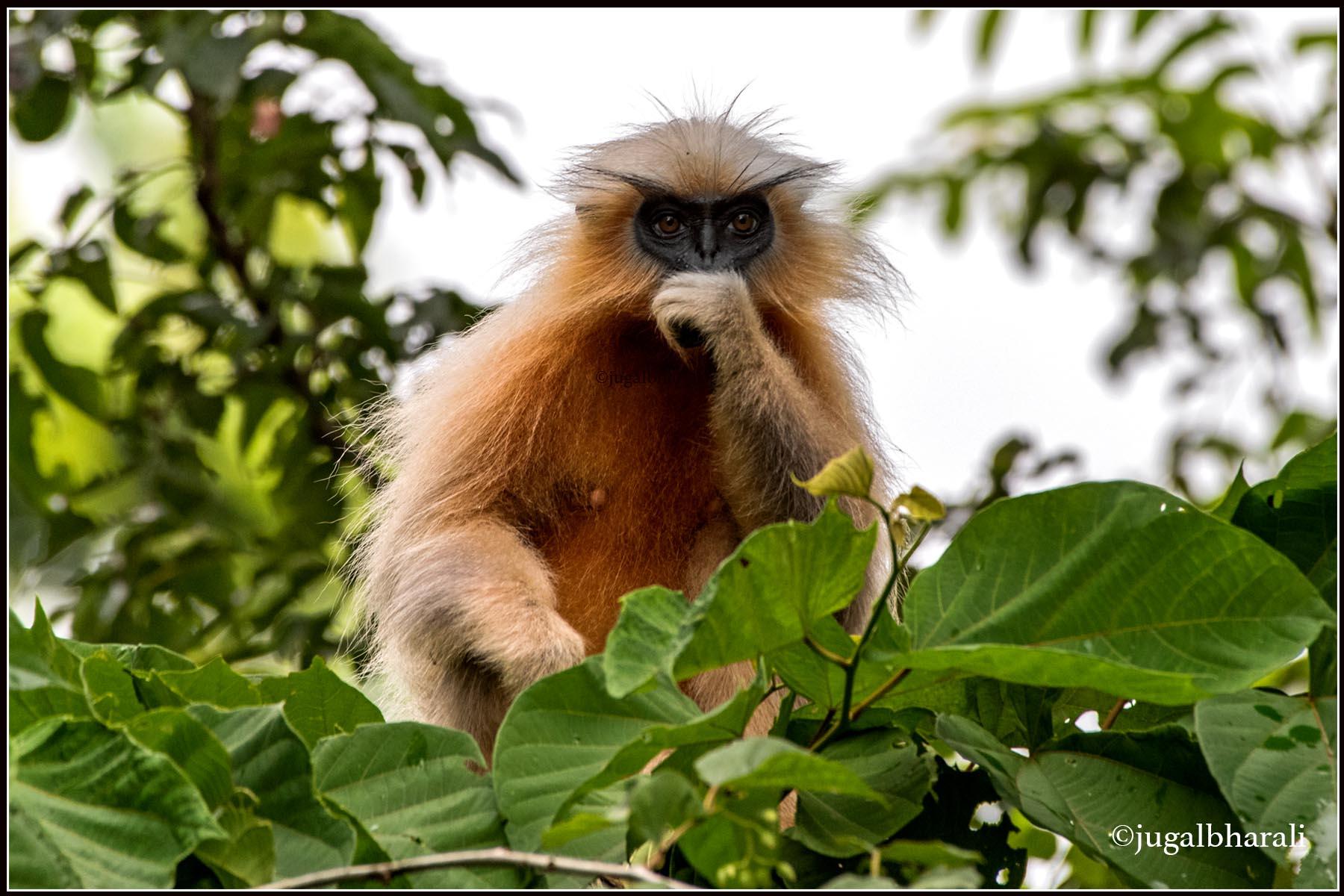 Biodiversity Park coming up at Kakoijana in Bongaigaon district.