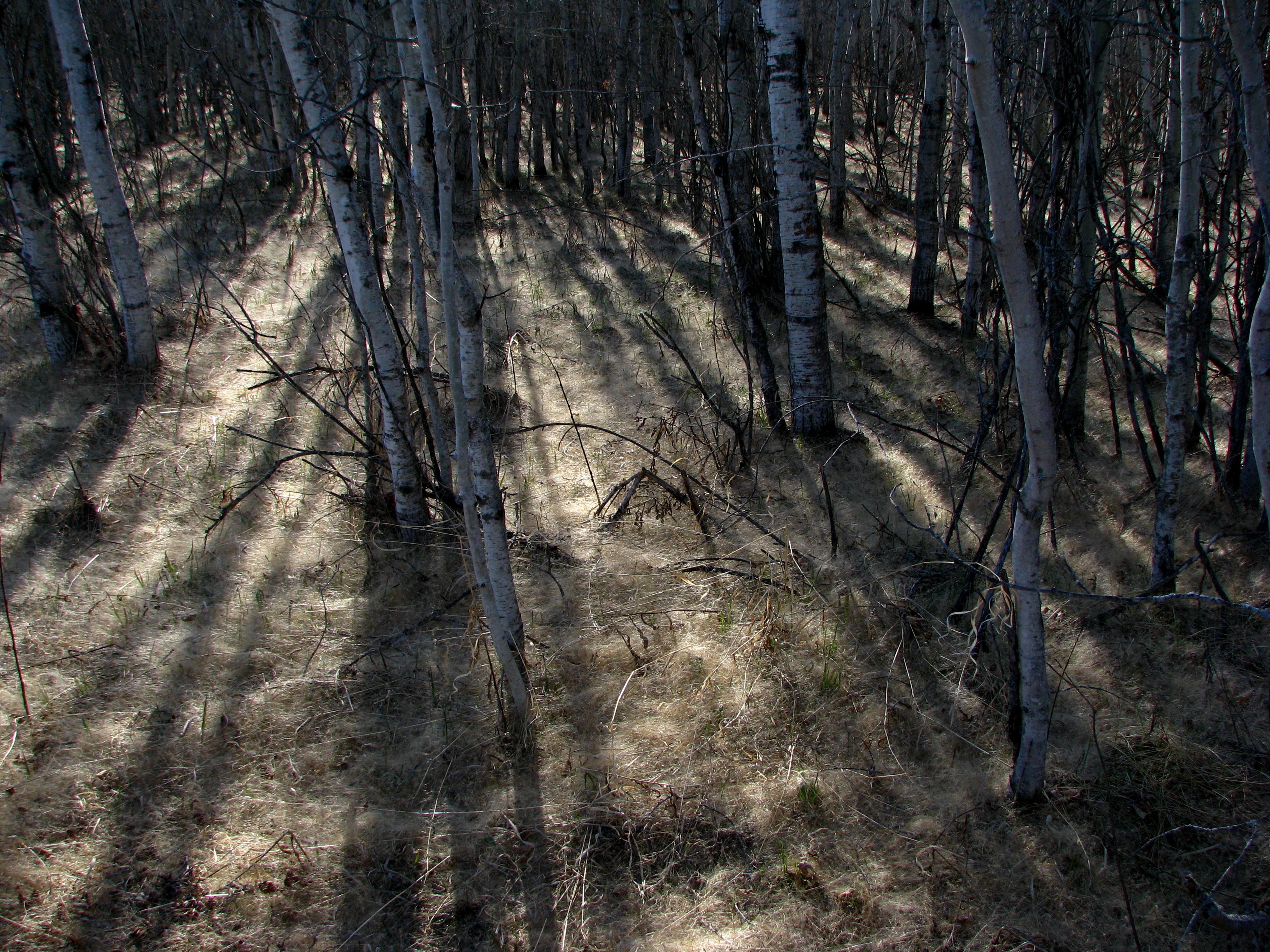 File:Grass Seed Carpet (3496305742) jpg - Wikimedia Commons