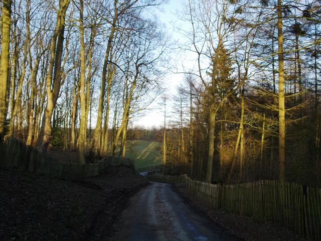 Hagg Road near Hagg Wood - geograph.org.uk - 1094155