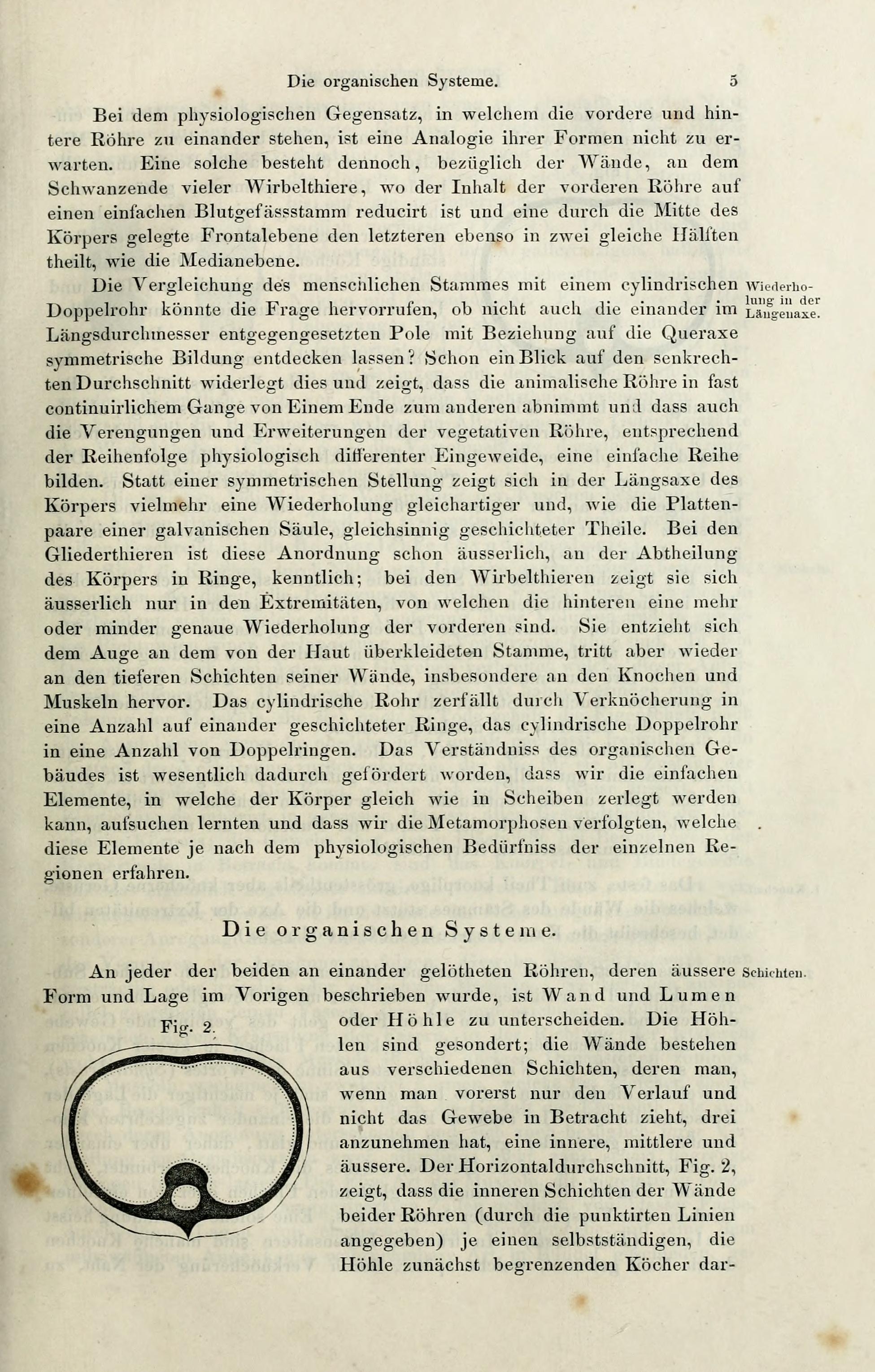 Fein Was Ist Gewebe In Der Anatomie Fotos - Menschliche Anatomie ...