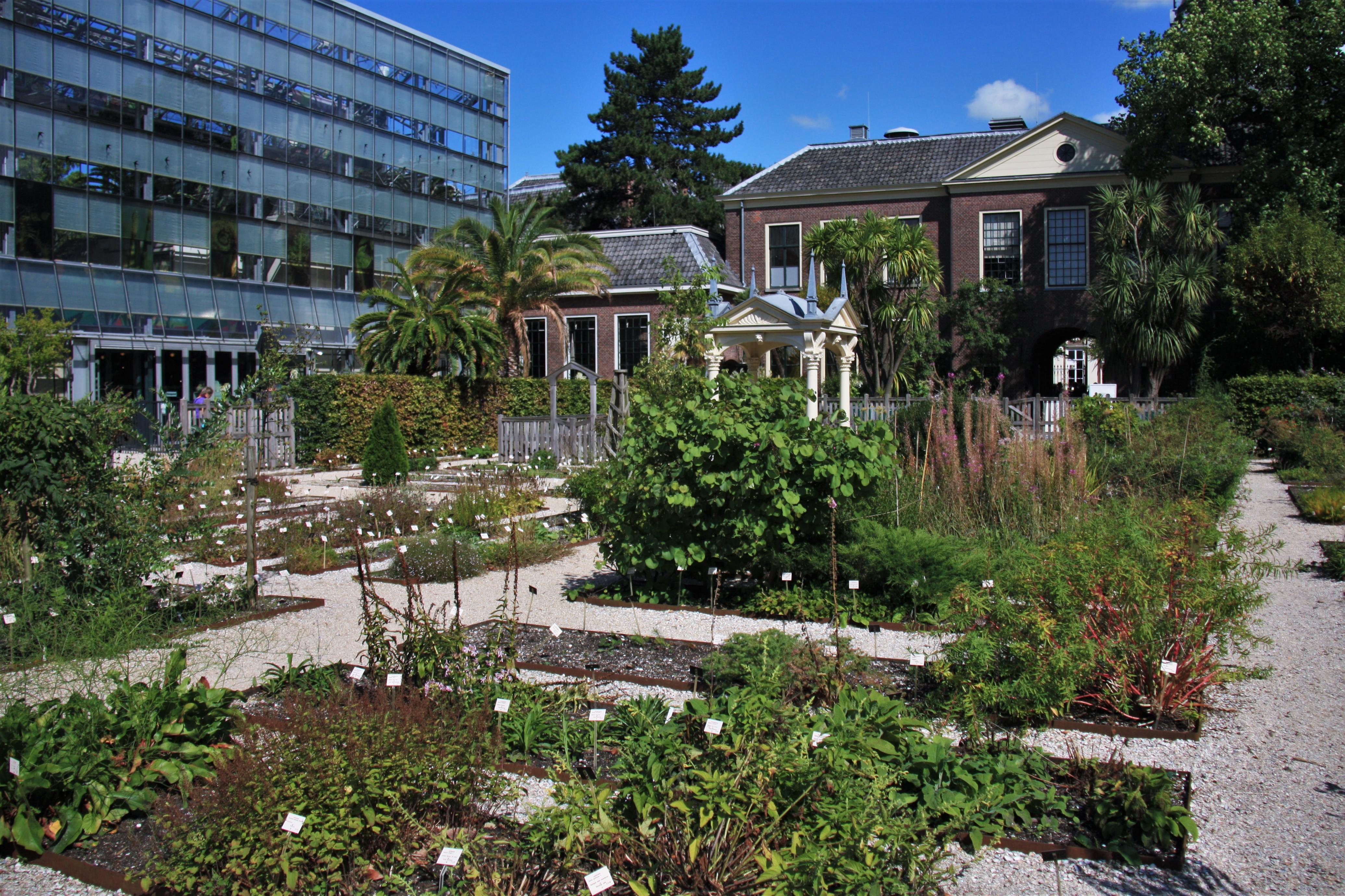 Botanische Tuin Leiden : File hortus botanicus leiden clusius garden g wikimedia commons