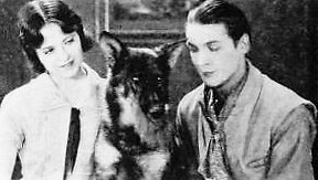 rin tin tin in movies the clash of wolves famous german shepherd in history