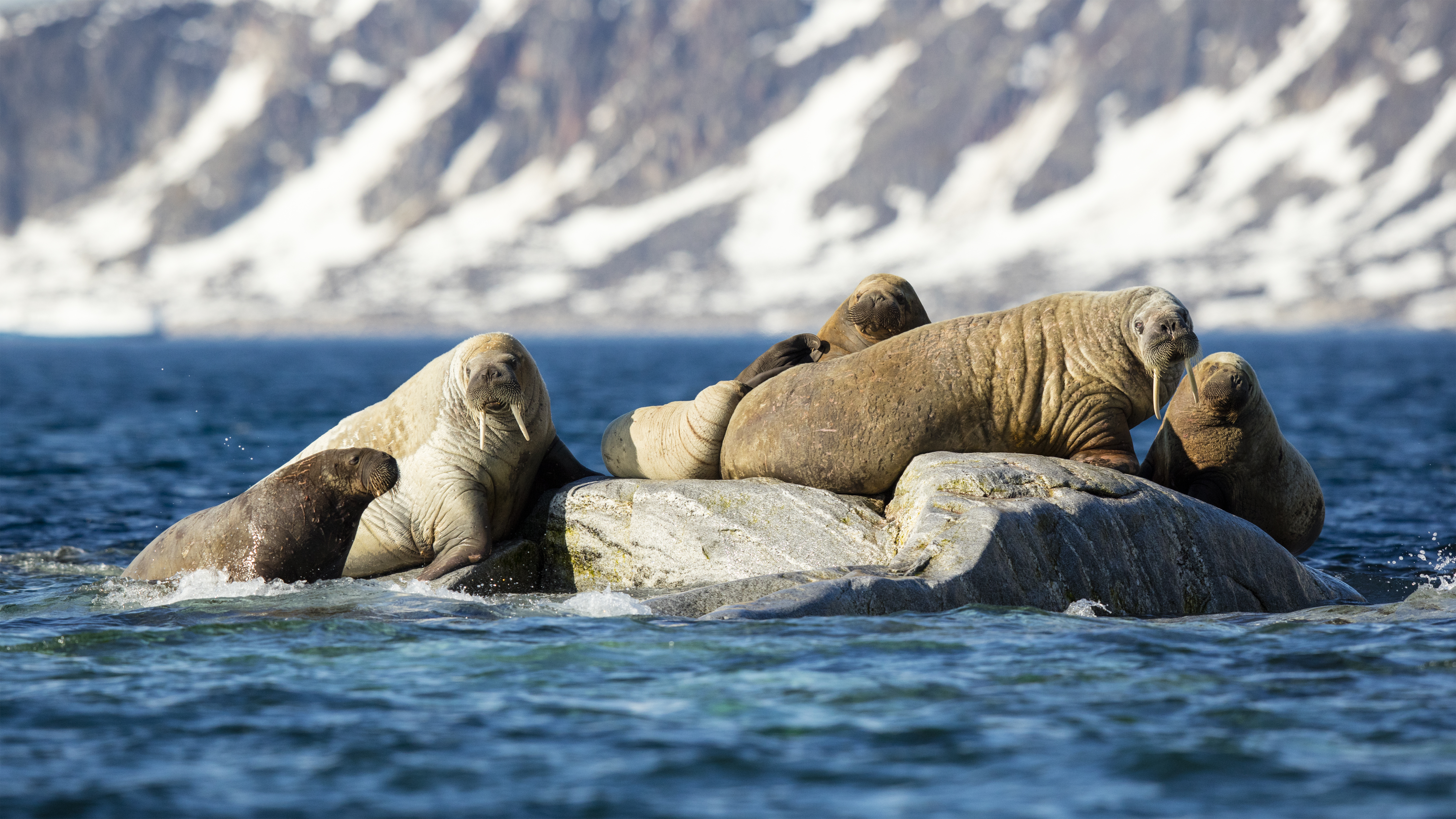 One Cool Thing: Where's Walrus?