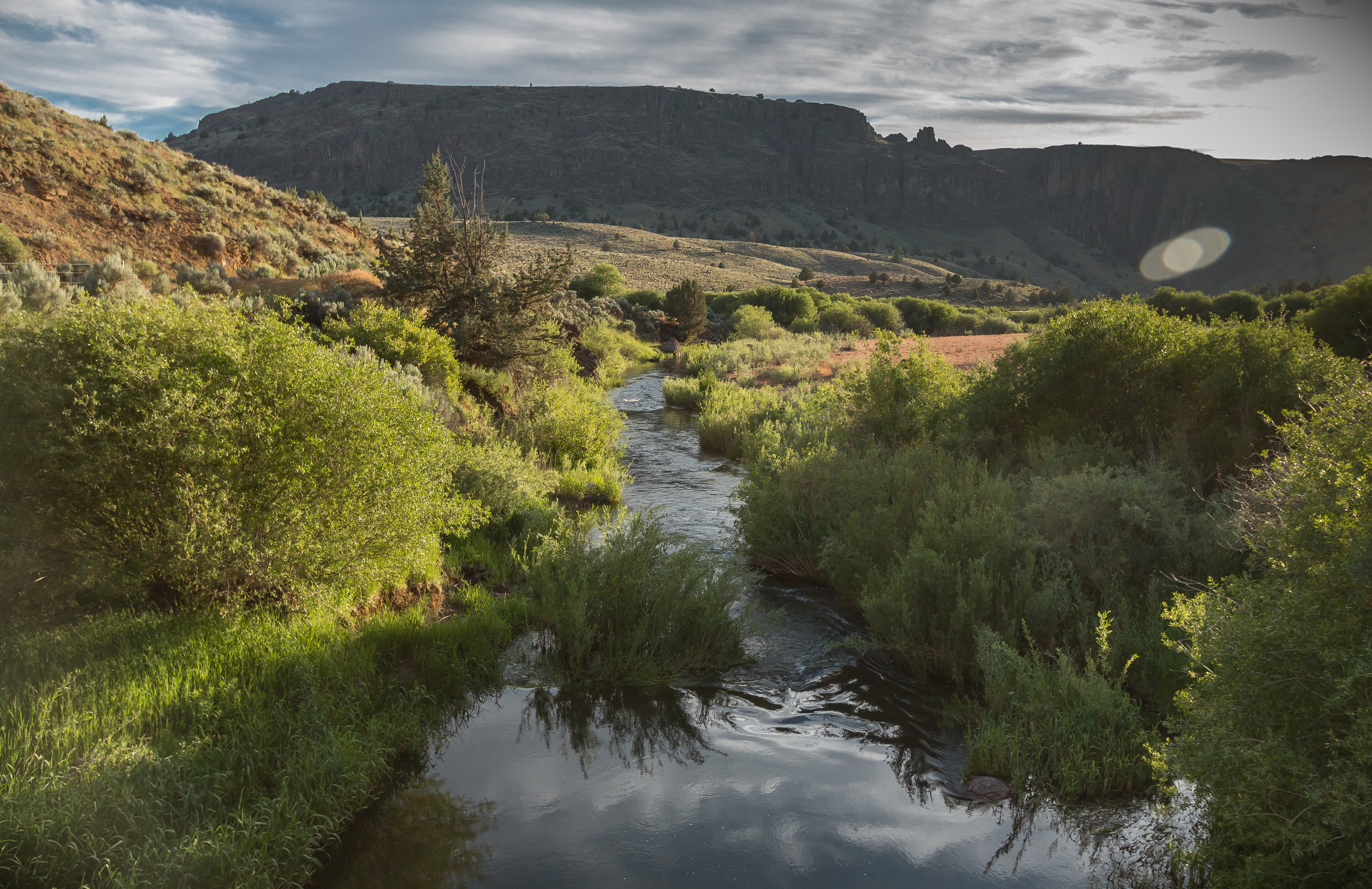 the main Owyhee Canyon. Other species known to live in the area include cougar, pronghorn antelope, and white-tailed jackrabbit. The abundance of small