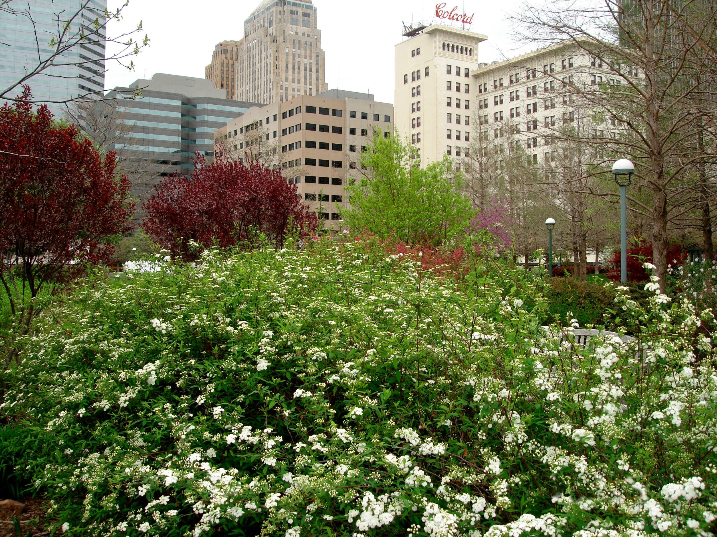 File:Oklahoma City, OK   Myriad Botanical Garden   Panoramio