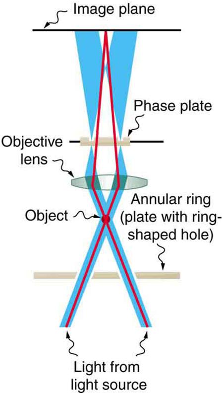 working principle of optical microscope pdf