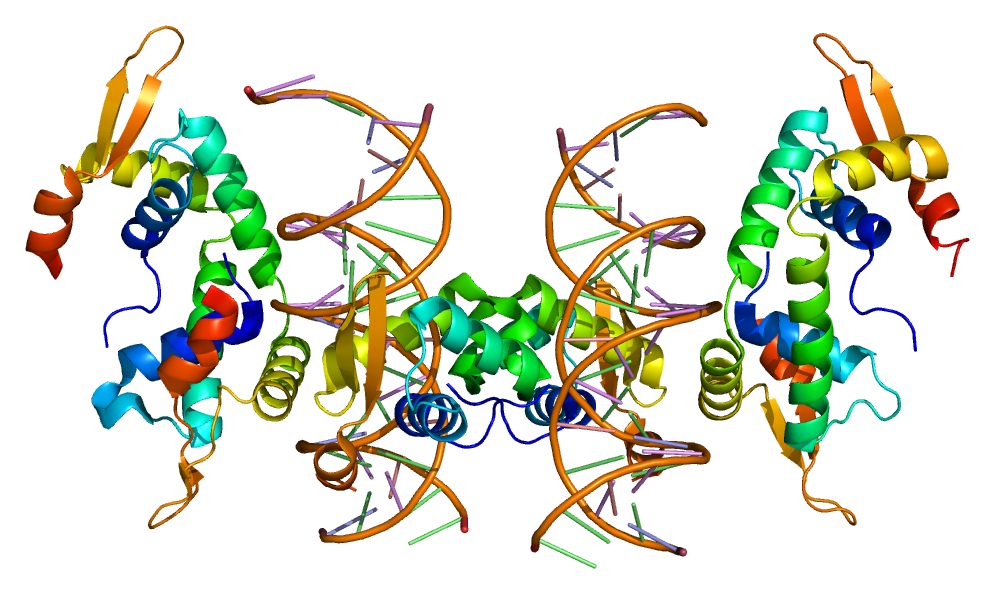 http://upload.wikimedia.org/wikipedia/commons/3/37/Protein_FOXP2_PDB_2a07.png