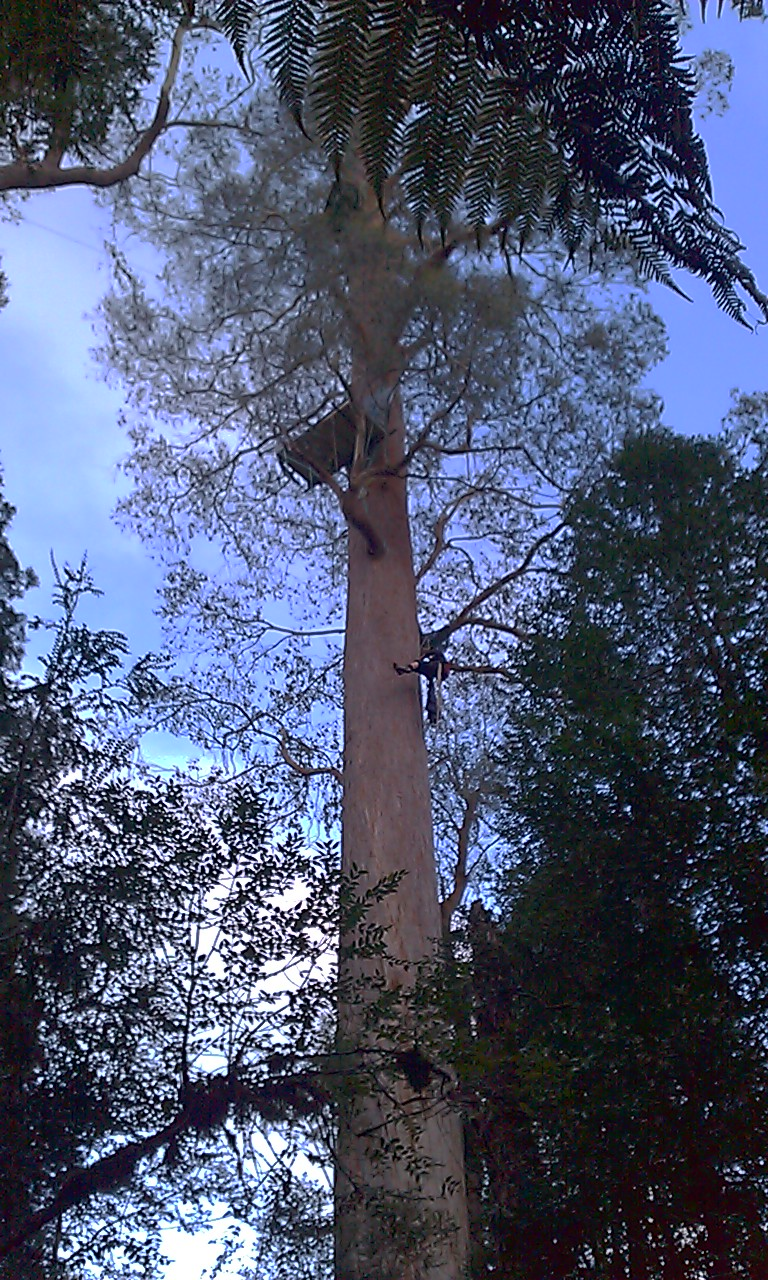 Tree sitting - Wikipedia