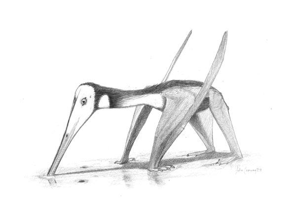 Pterodactylus-kochi NYC.jpg