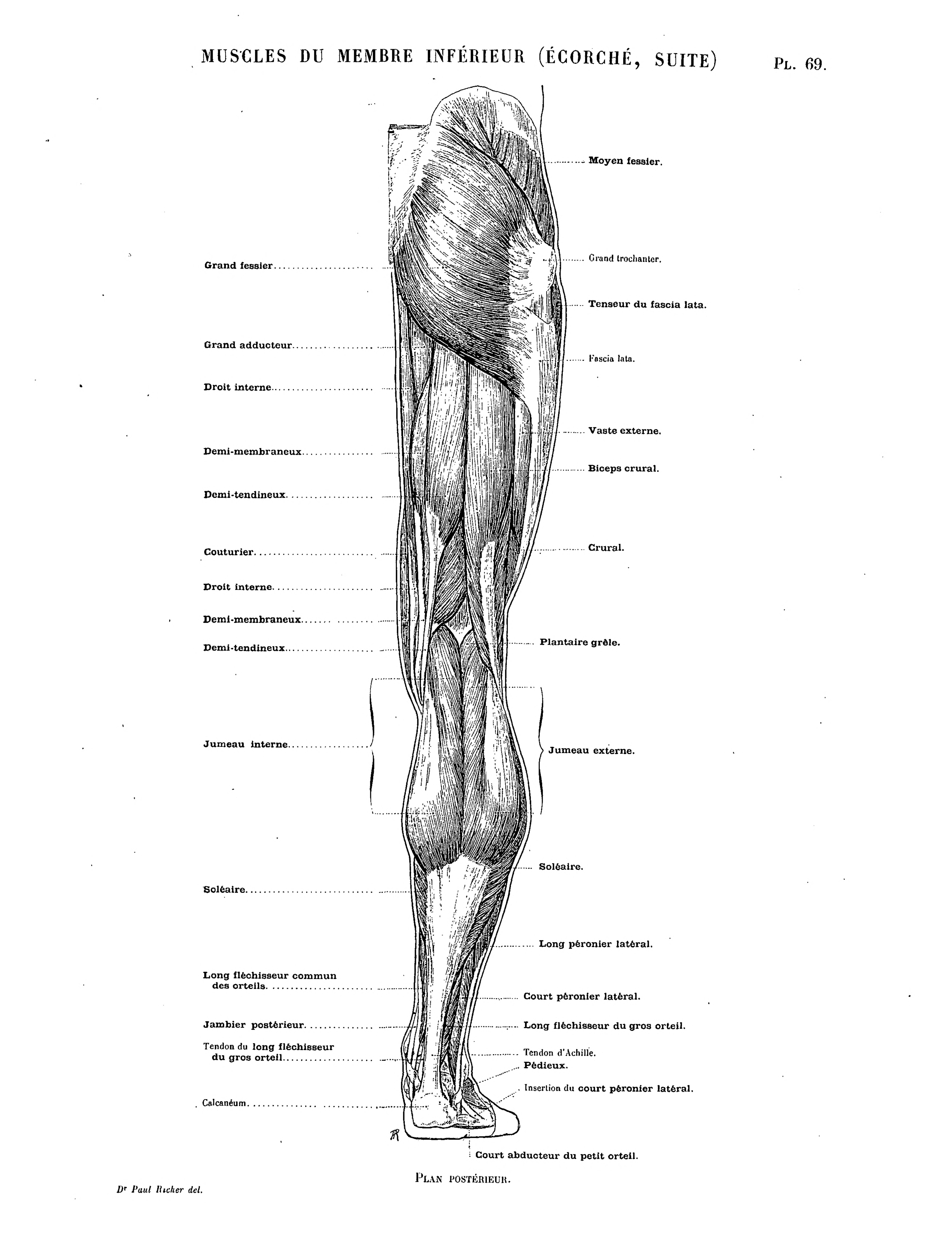 Beste Anatomie Der Arme Galerie - Menschliche Anatomie Bilder ...