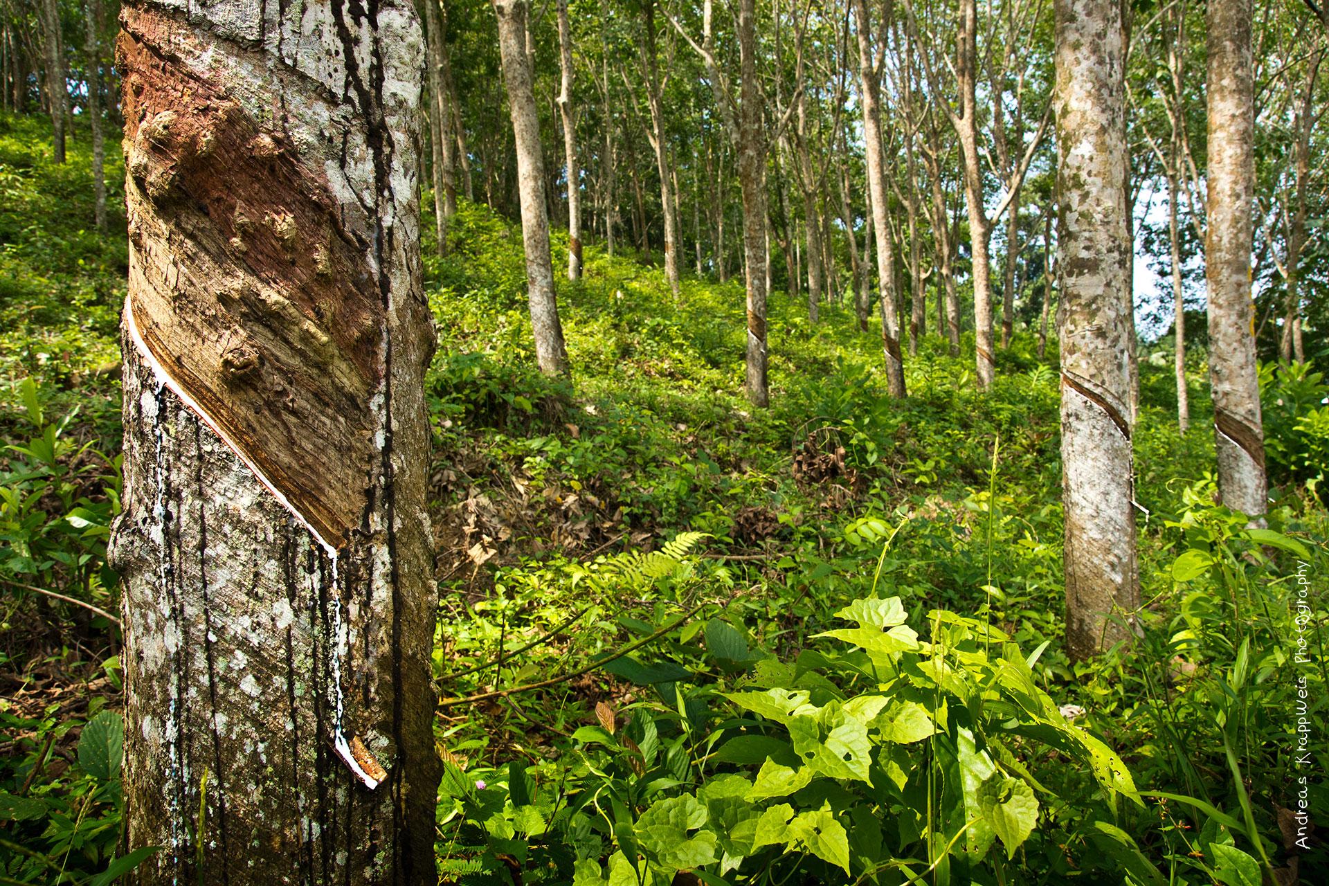 forest types in sri lanka pdf