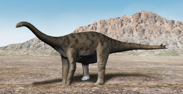 http://upload.wikimedia.org/wikipedia/commons/3/37/Spinophorosaurus_NT.jpg