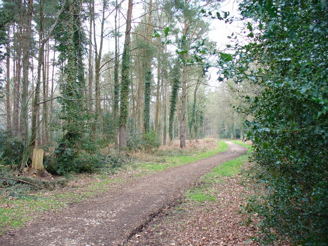 Track in Alice Holt Forest - geograph.org.uk - 383155