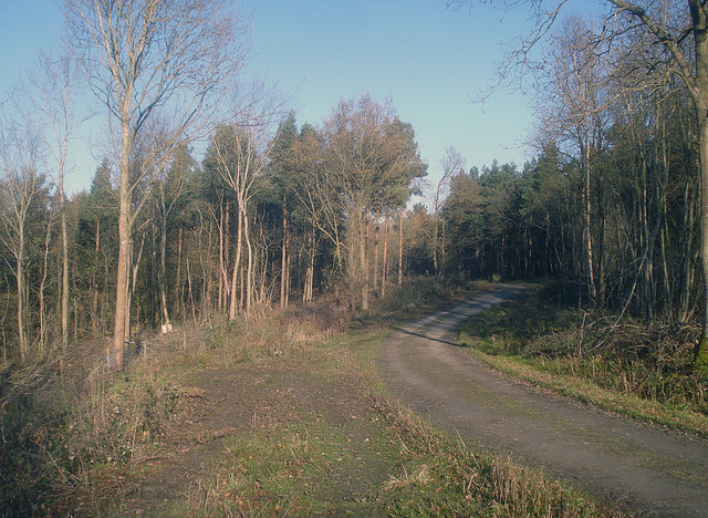 Track in Tiddesley Wood - geograph.org.uk - 1159968