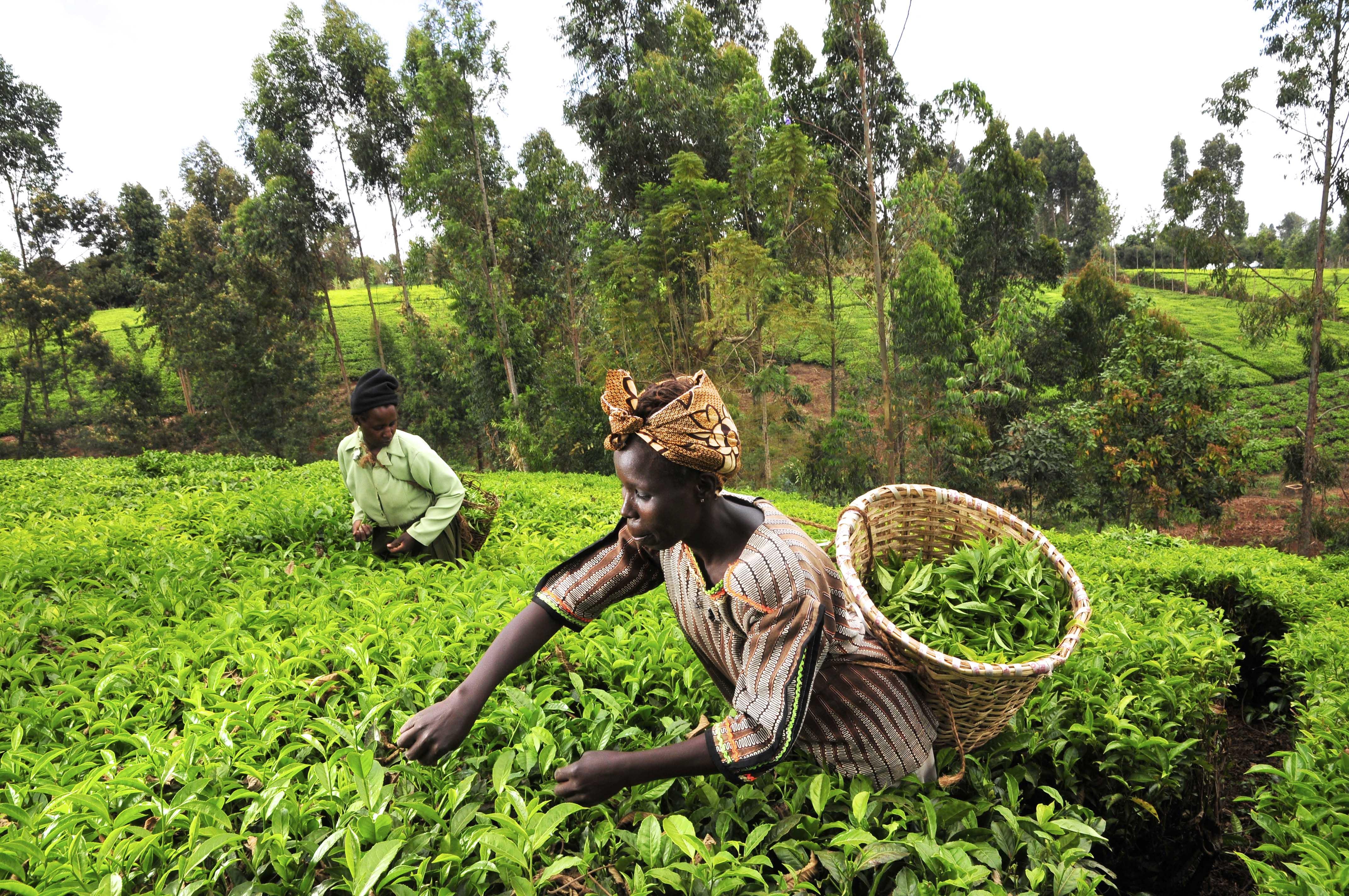 farmers africa