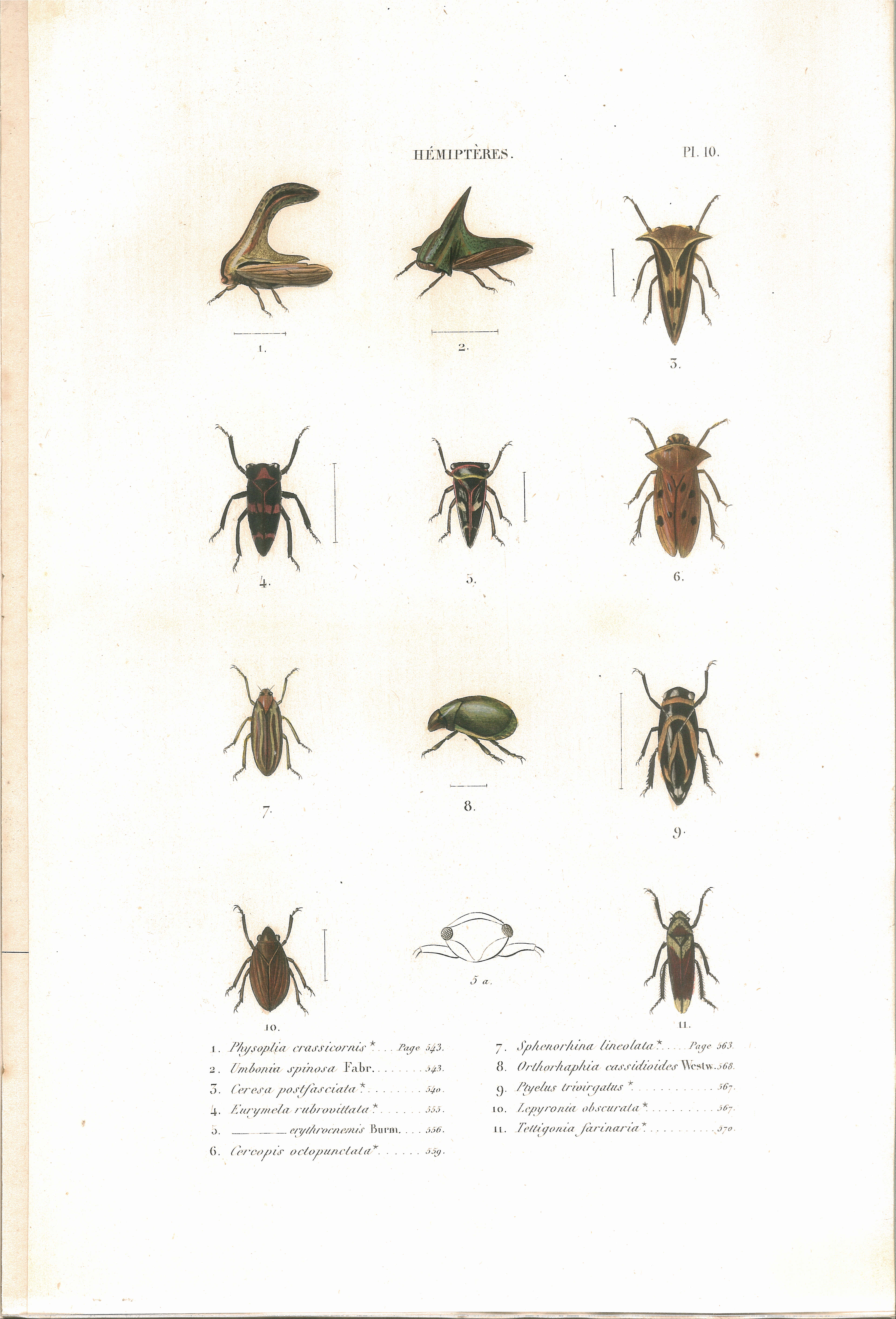 File amyot c j histoire naturelle des insectes for Histoire des jardins wikipedia