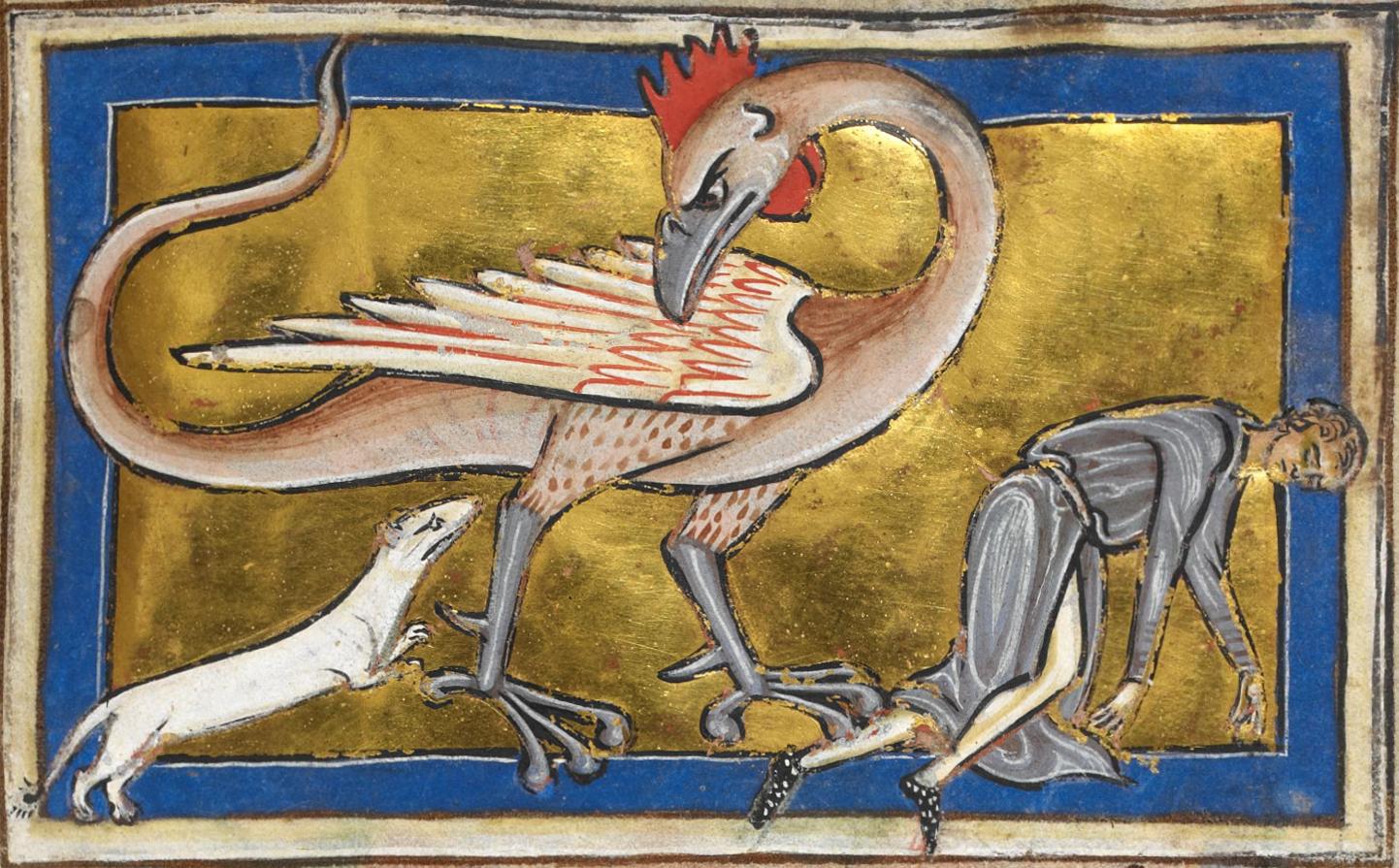 Basilisco, en un Bestiario medieval del siglo XIII.