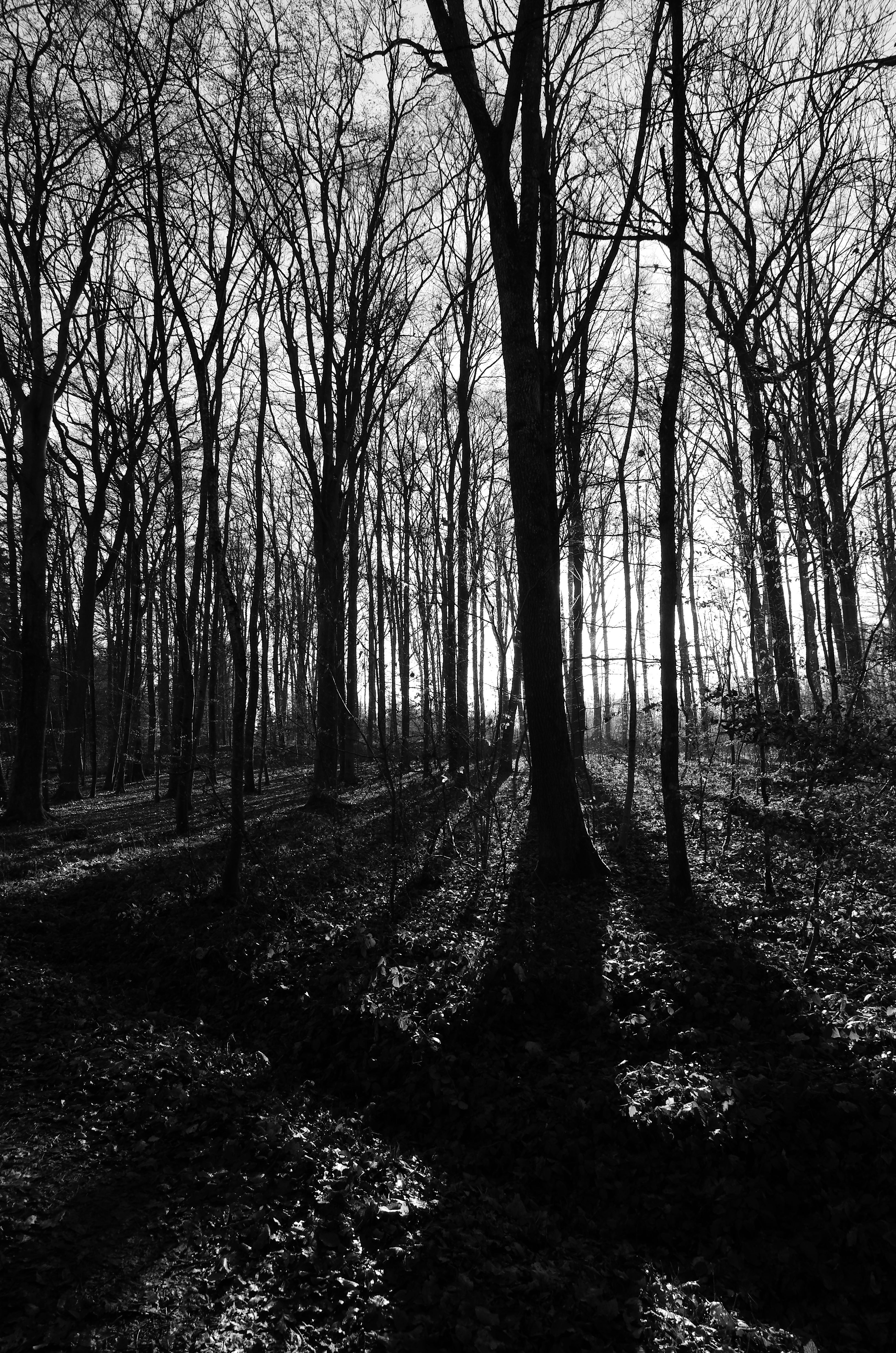 Free Images : tree, nature, wilderness, branch, mountain ... |Winter Forest Black And White
