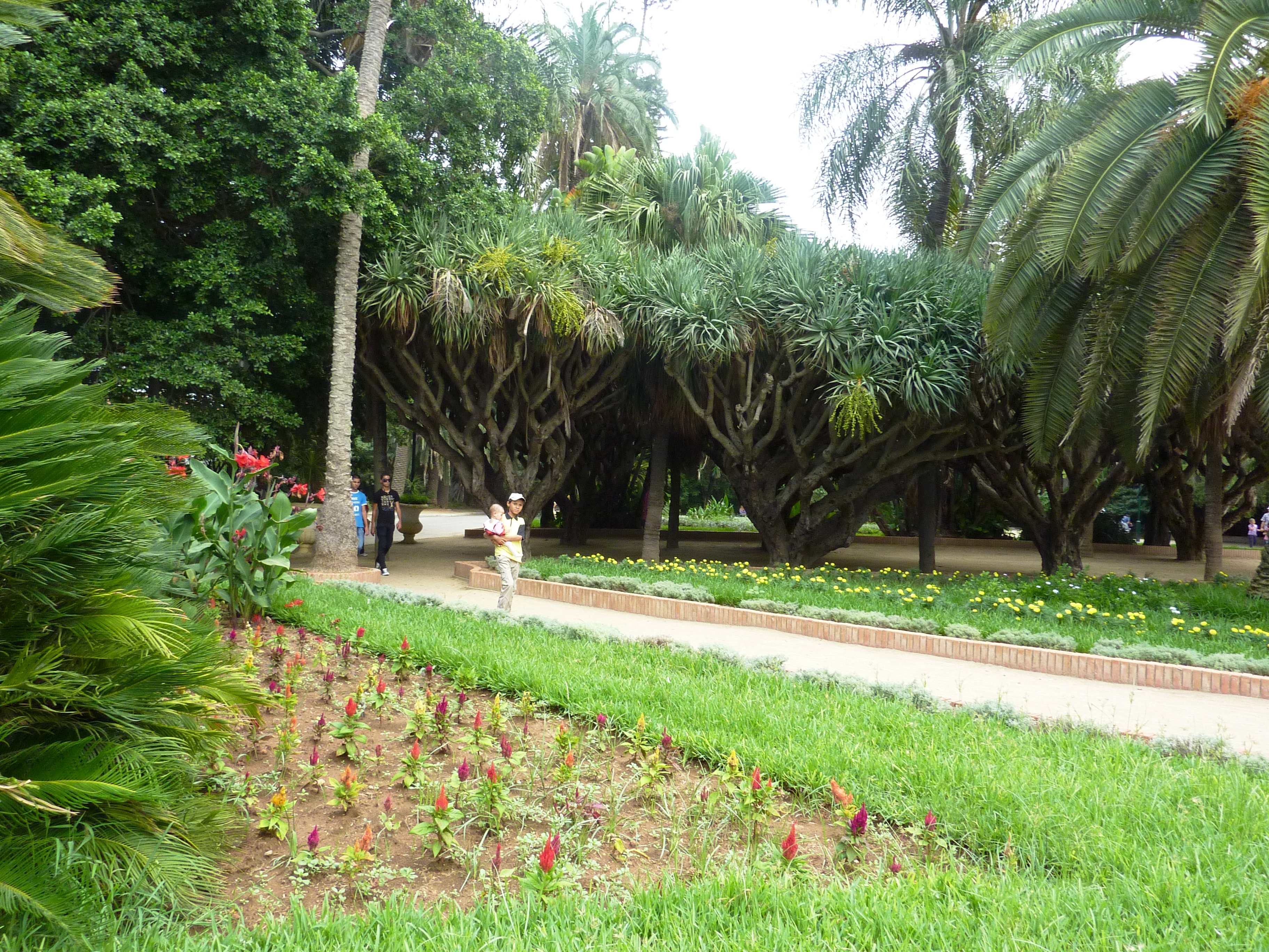 File botanique jardin d 39 essai el hamma alger jpg for Jardin olof palme alger