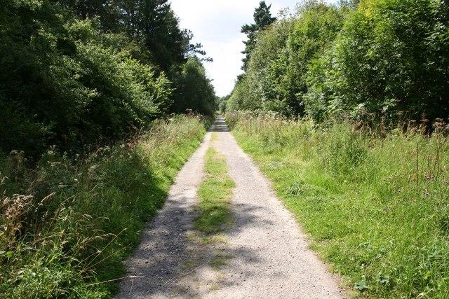 Chambers Farm Wood - geograph.org.uk - 519657