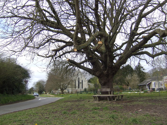 Cockley Cley Oak - geograph.org.uk - 518216