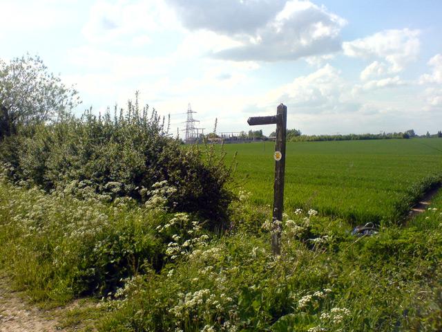Footpath signpost on Robin Hood Way - geograph.org.uk - 439195