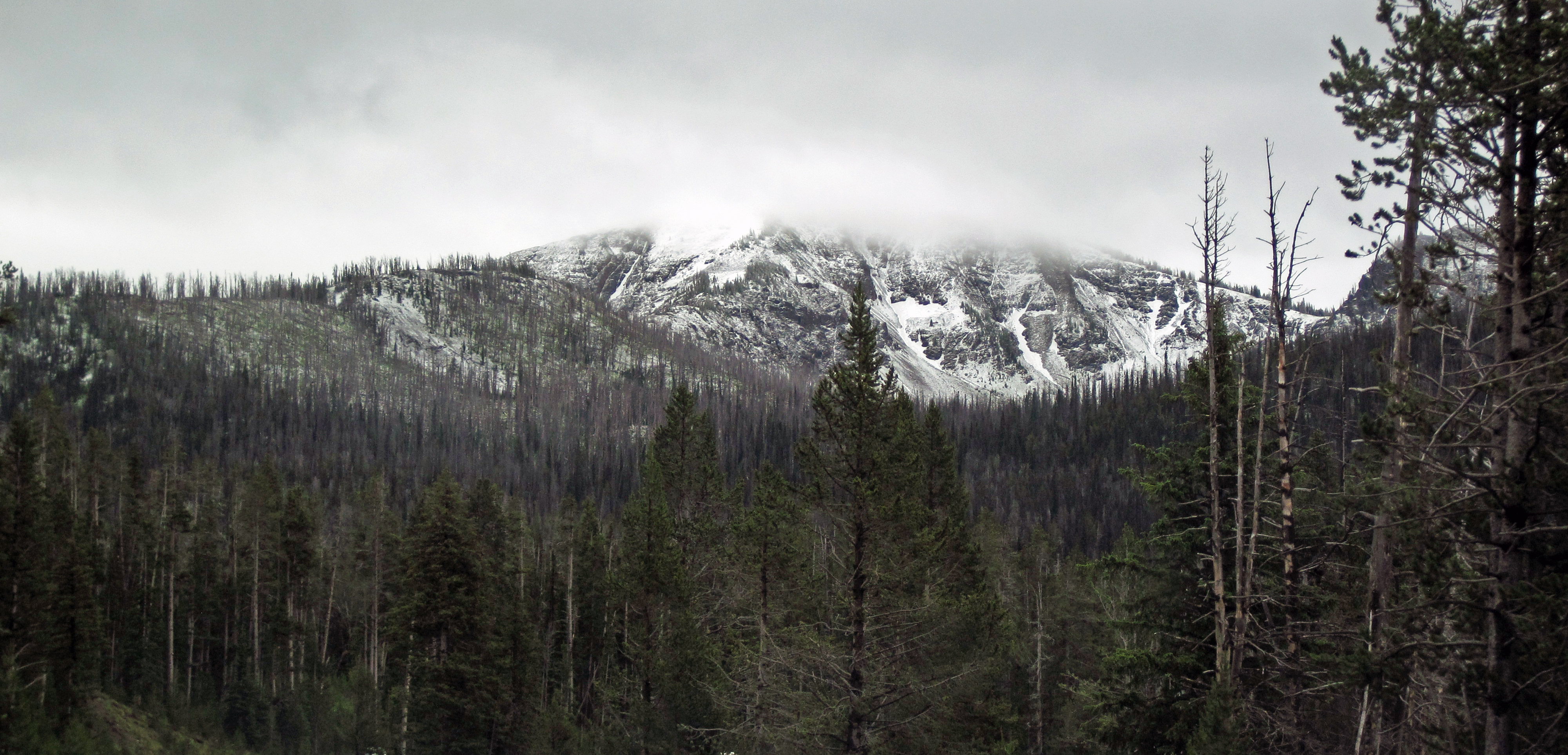 Freshly-fallen_snow_in_the_Absaroka_Range_%2811_July_2016%29_%28near_Sylvan_Pass%2C_Yellowstone%2C_Wyoming%2C_USA%29_2_%2827845376773%29.jpg