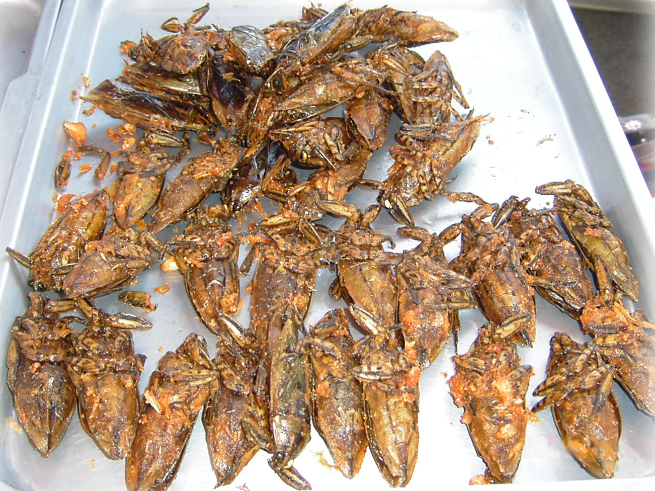 Bed Bugs Arizona Unicersity