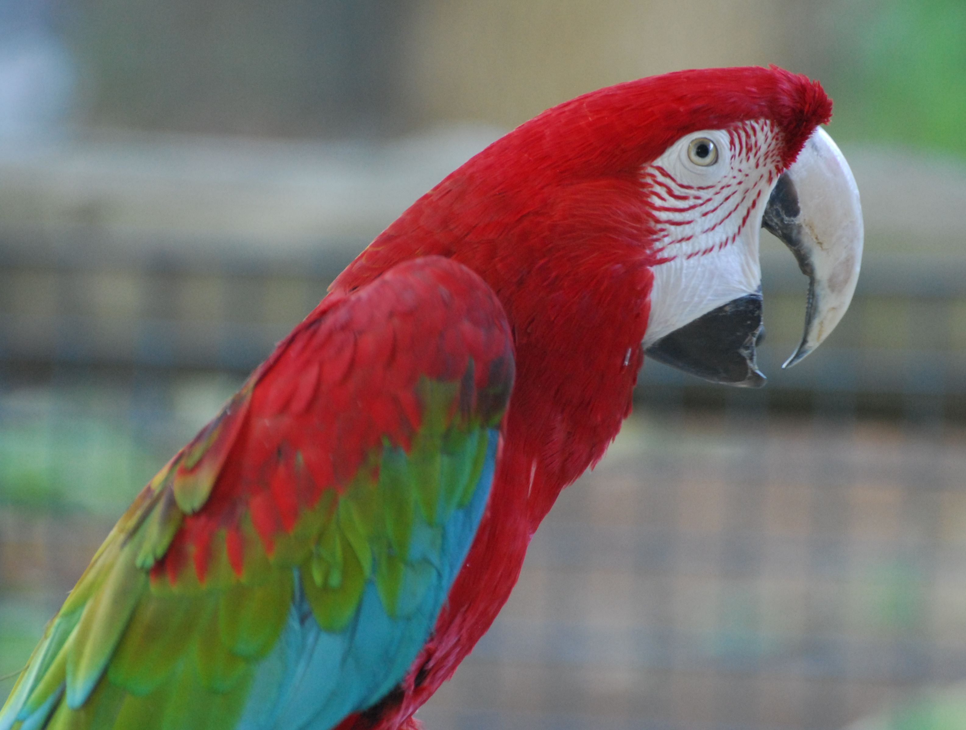 cute photos of parrot green winged macaw
