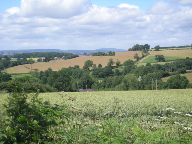 File:Growing cereals - geograph.org.uk - 884198.jpg