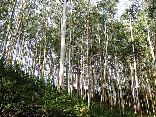 Gudalur, Nilgiris - Wikipedia-6415