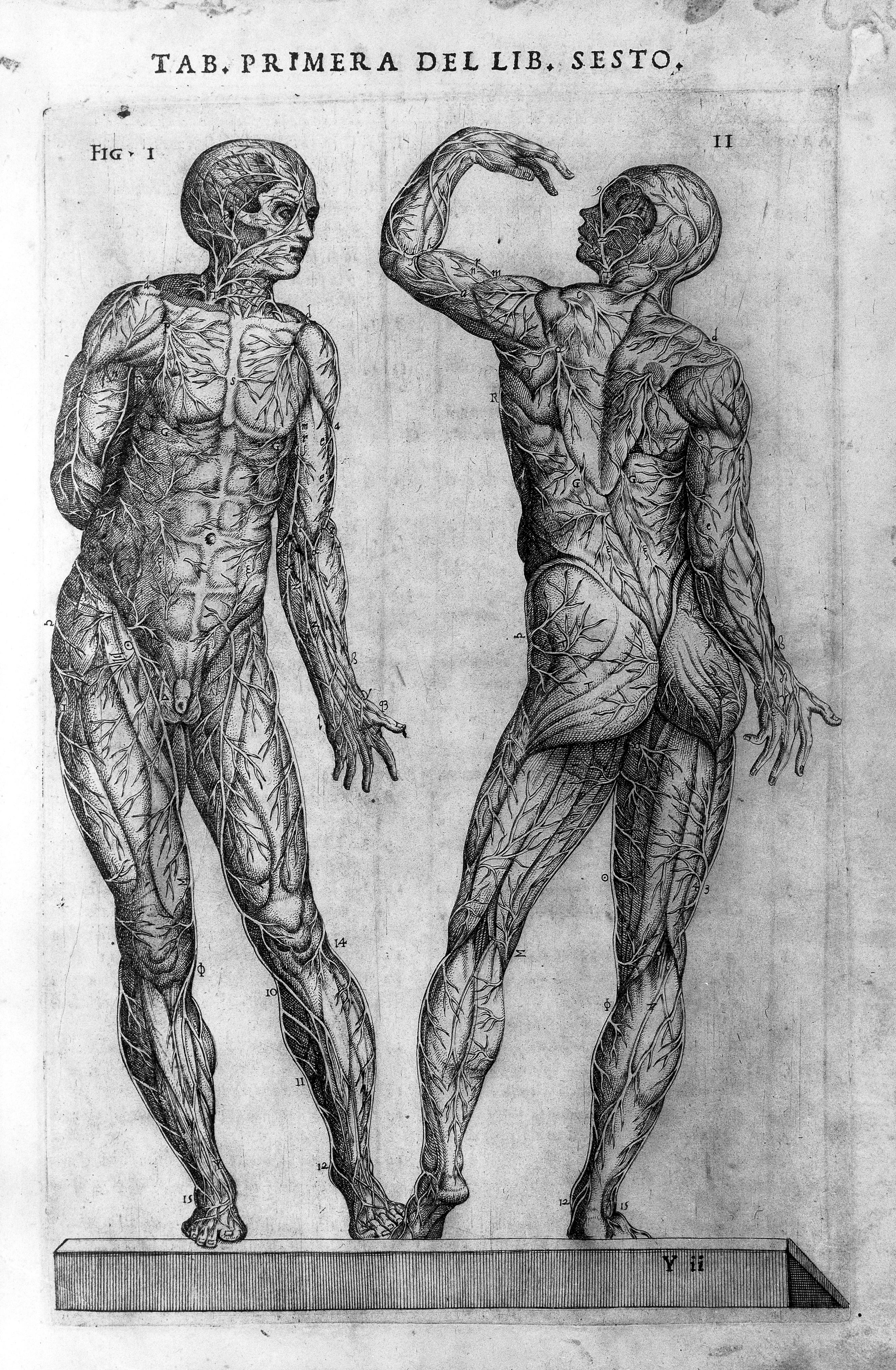 File:Hamusco, Historia de la composicion del cuerpo humano Wellcome ...