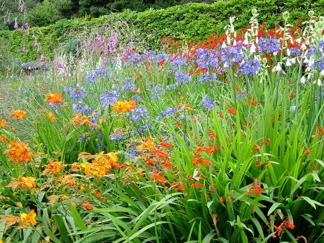 file herbaceous border inverewe gardens   geograph org uk