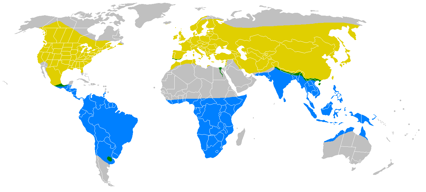 Elterjedési területe (a sárgán költ, a zölden állandó és a kéken áttelel)