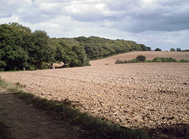 Hockley Woods - geograph.org.uk - 544872