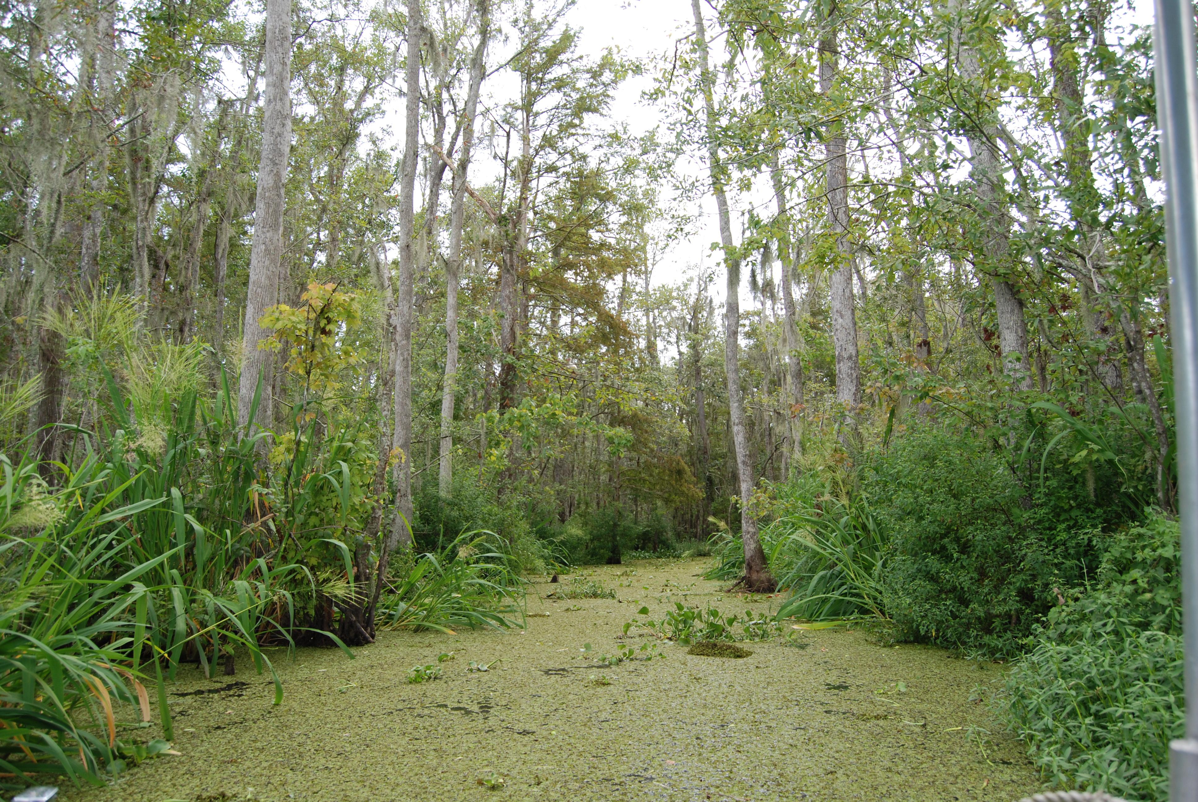 Baton Rouge Swamp Tours Bluebonnet