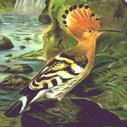 Žalvarniniai paukščiai