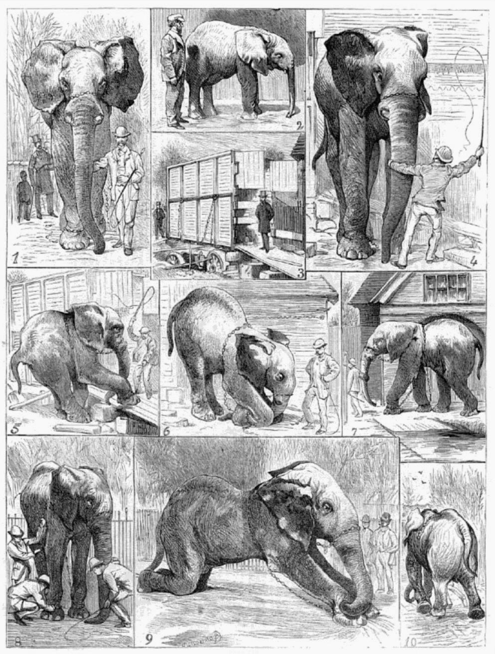Jumbo Elephant Png : Jumbo_the_elephant.png (16 × 16 pixels, file size: