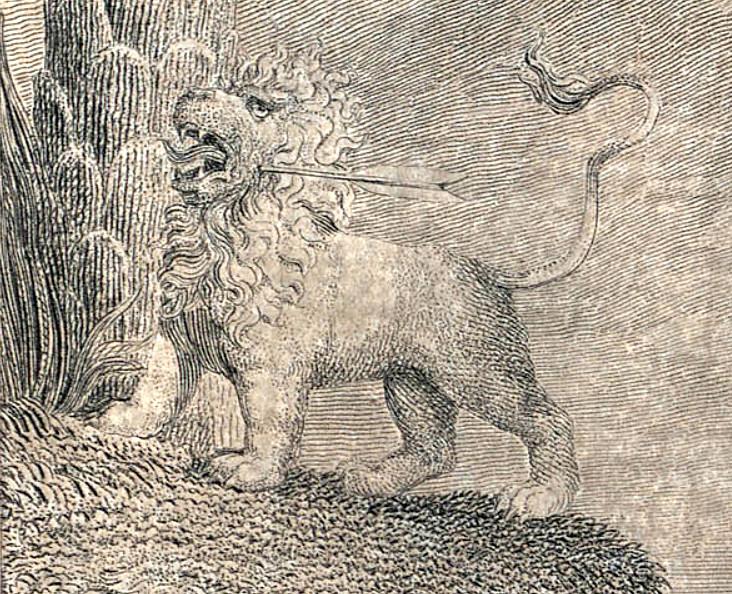 Lion - William Hayley, Designs to a Series of Ballads, object 9 (Bentley 466-9) detail.jpg