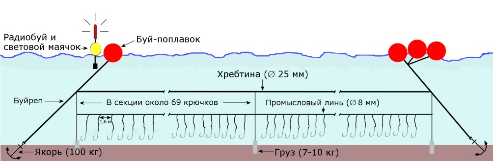 File Longline Spanish Bottom2 Jpg Wikimedia Commons