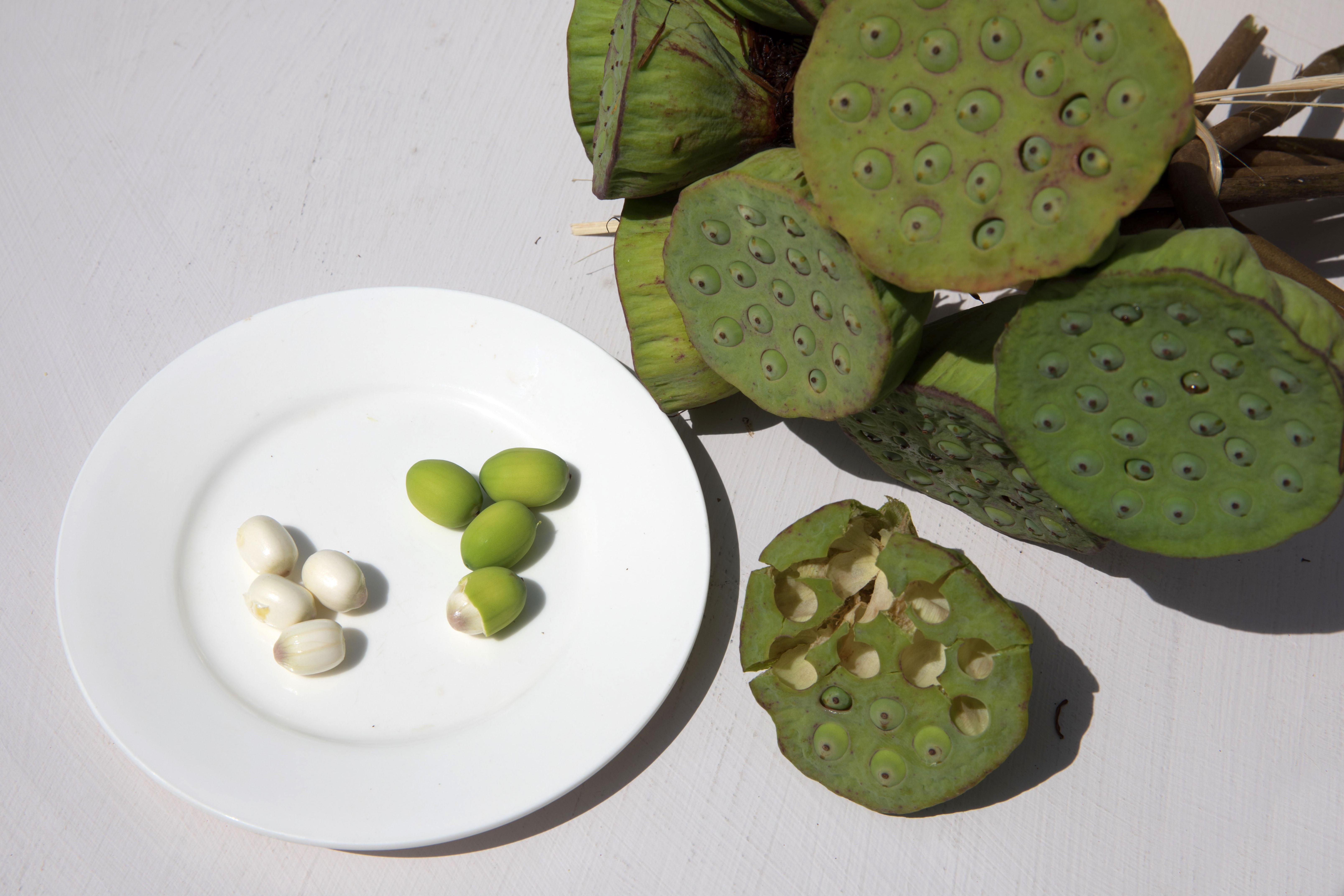 Nelumbo nucifera wikipedia fresh lotus seeds ready to eat izmirmasajfo Image collections