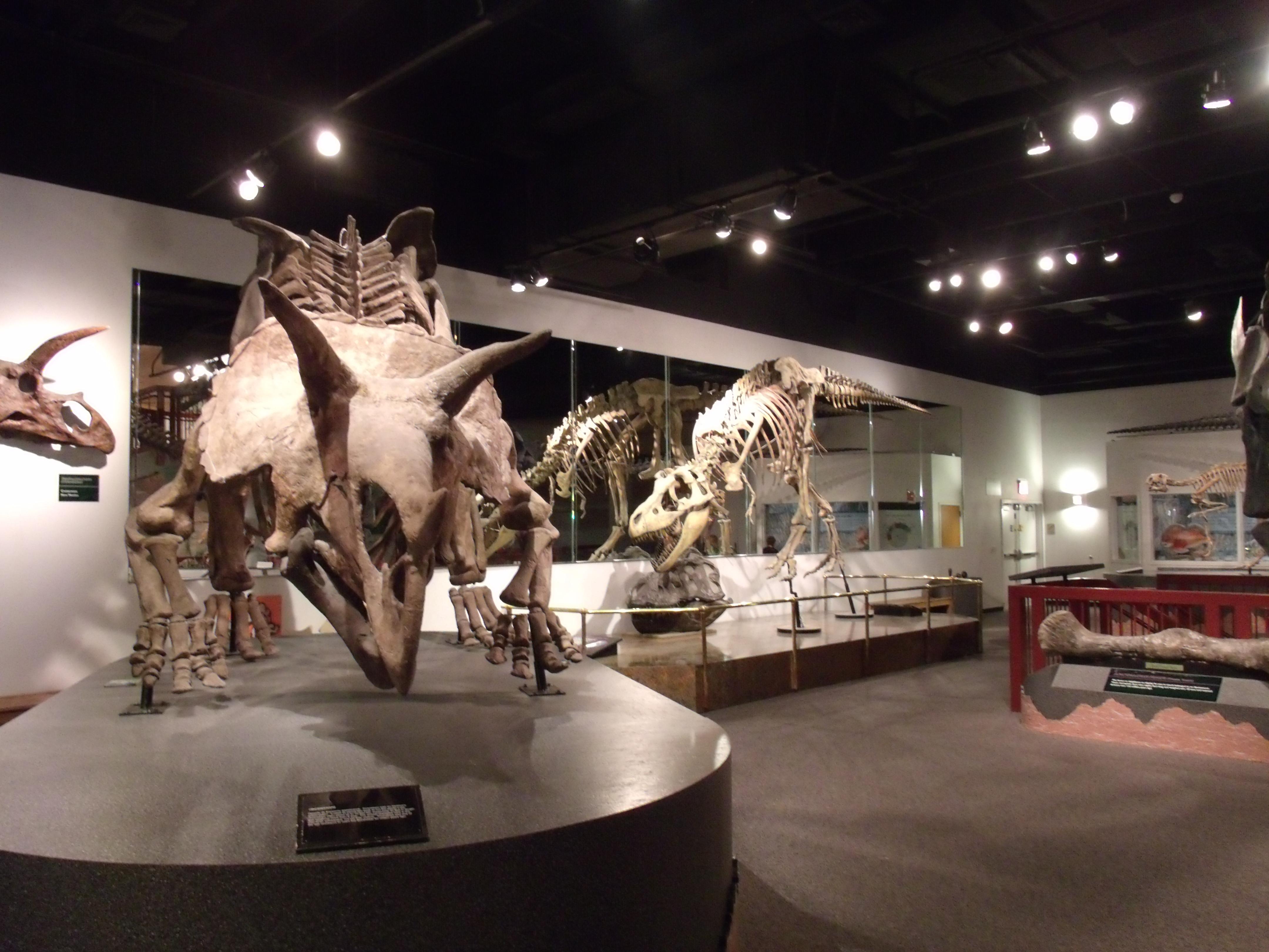 Mesa Museum Of Natural History Dinosaurs