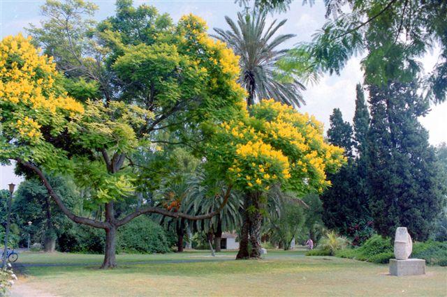 PikiWiki Israel 13961 Flowering tree